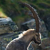 In the land of ibex