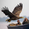 Fishing eagles September 2017